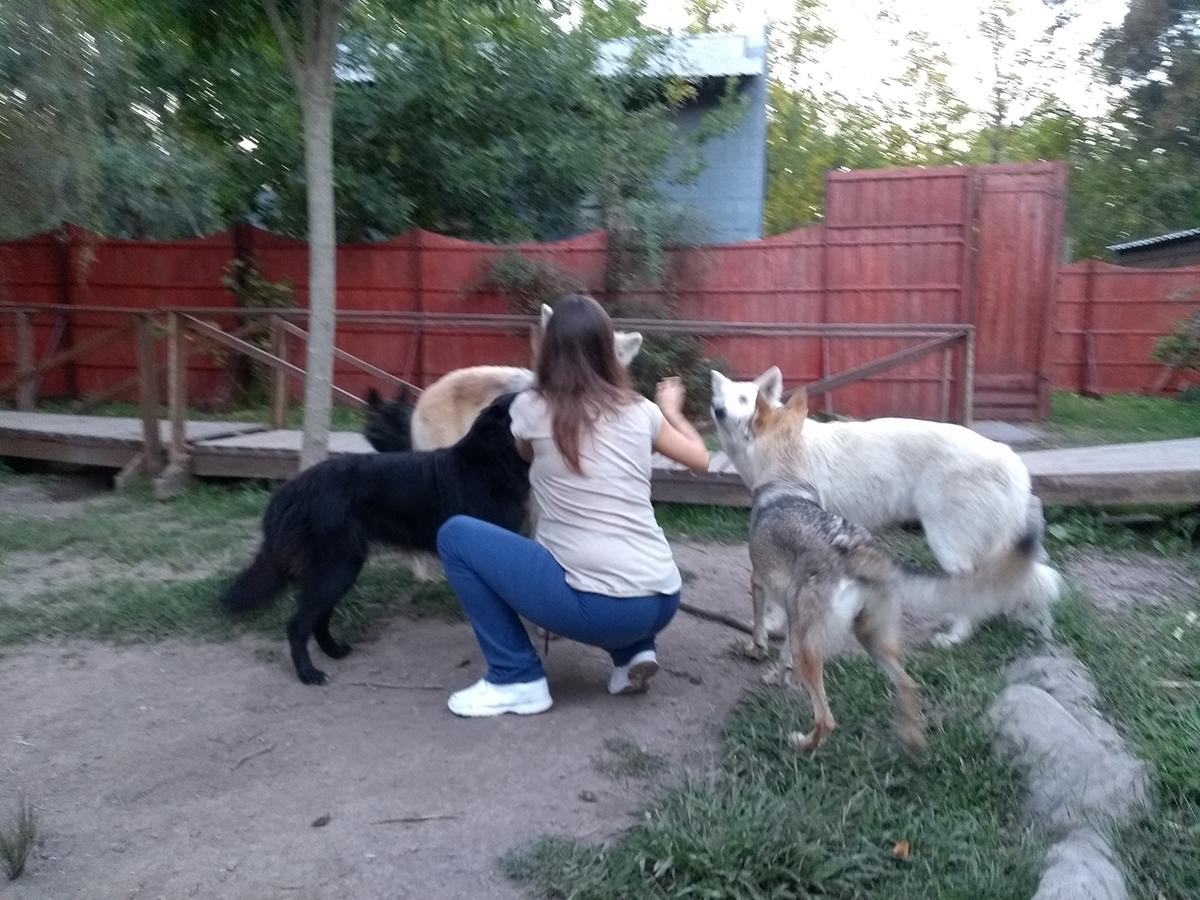 los lobos son parte de nuestra vida